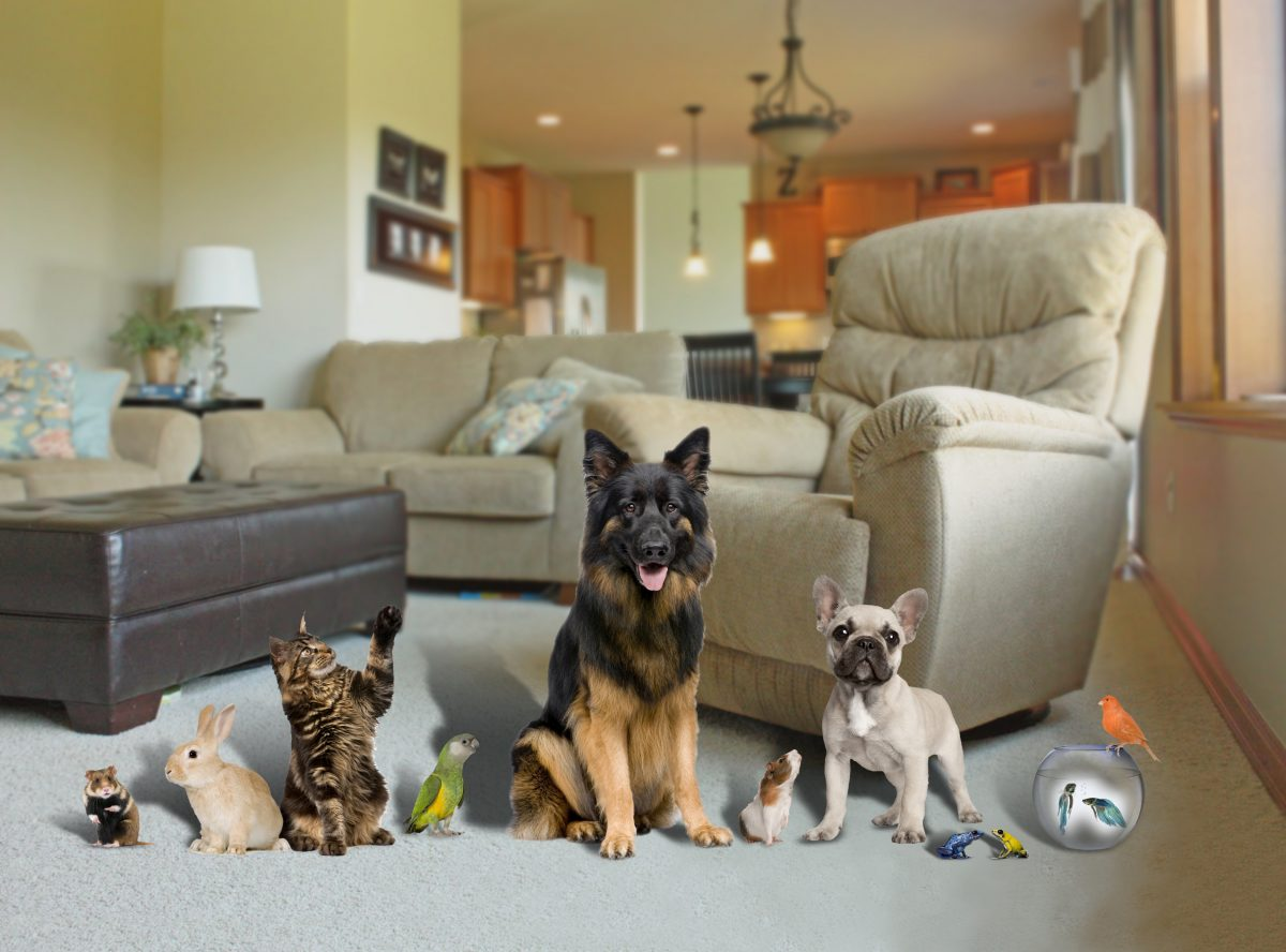 Ways to Make Your Pet Home Feel More Relaxing